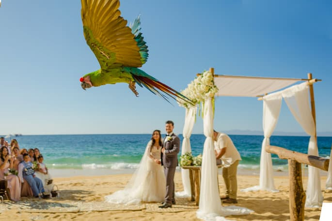 Macaw Ring Bearer for Destination Wedding