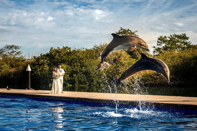 Dolphins at Destination Wedding